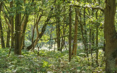 The Woodland Project